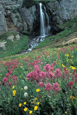 Waterfall and Flowers Fine Art Print