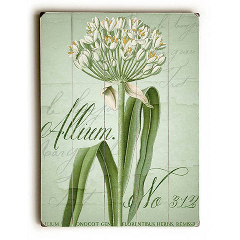 Allium No 312 Wood Sign
