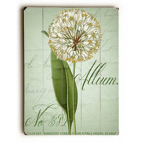 Allium No 381 Wood Sign