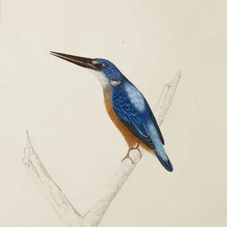 Java Kingfisher Earring