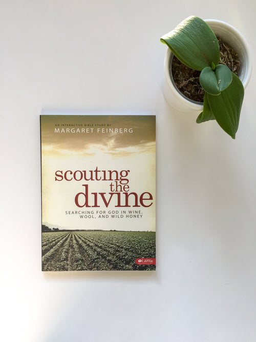 Scouting the Divine Workbook