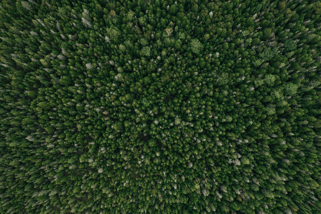 Aerial top view shot of tress in forest, wide photo