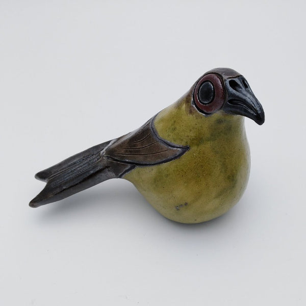 Bellbird sitting bird