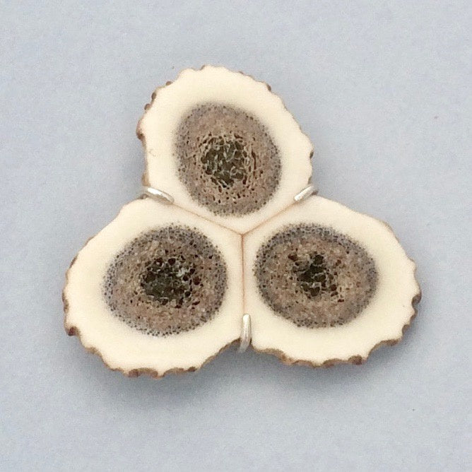 Cross-section antler tri-brooch