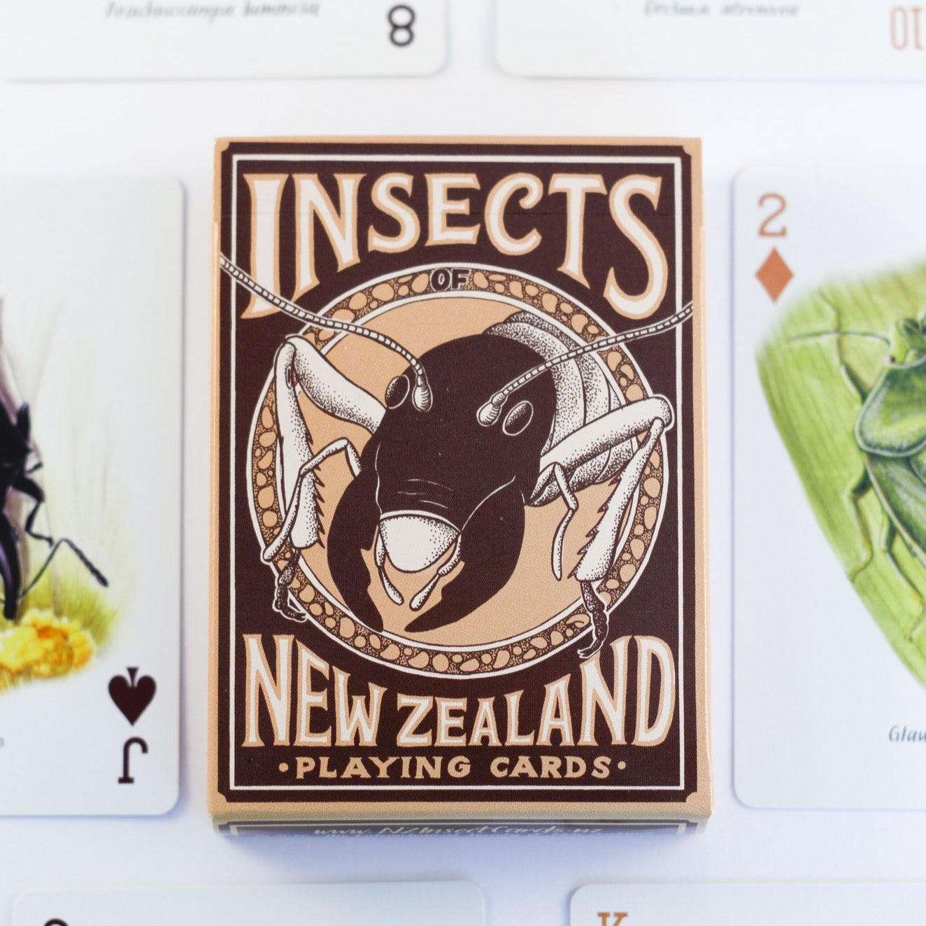 Insects of NZ card deck