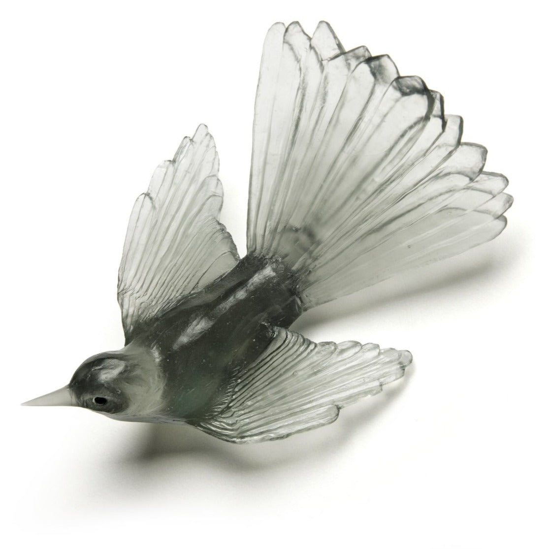 Fantail - Grey
