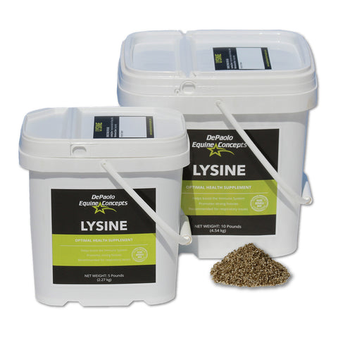 Picture of Lysine