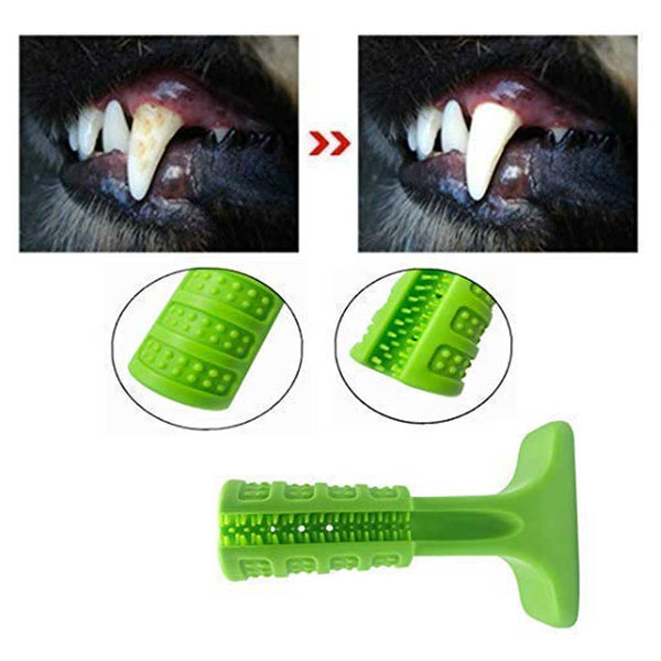 Pet Molar Tooth Cleaning Brushing
