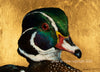Wascana Wood Duck