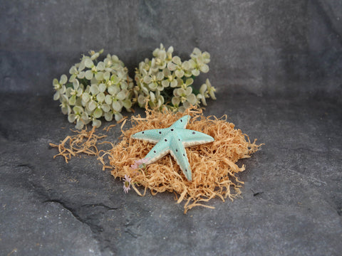 Star Fish Paper Weights - Blue