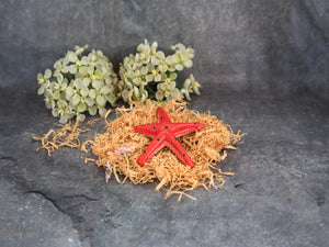Star Fish Paper Weights - Red