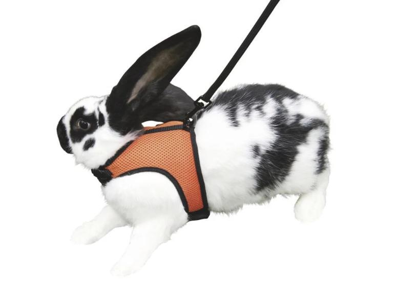 Rabbit & Guinea pig harness sport