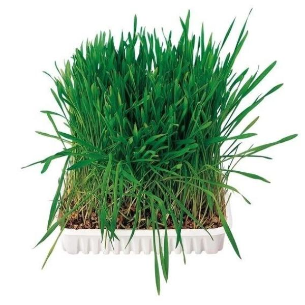 Small Animal Grass