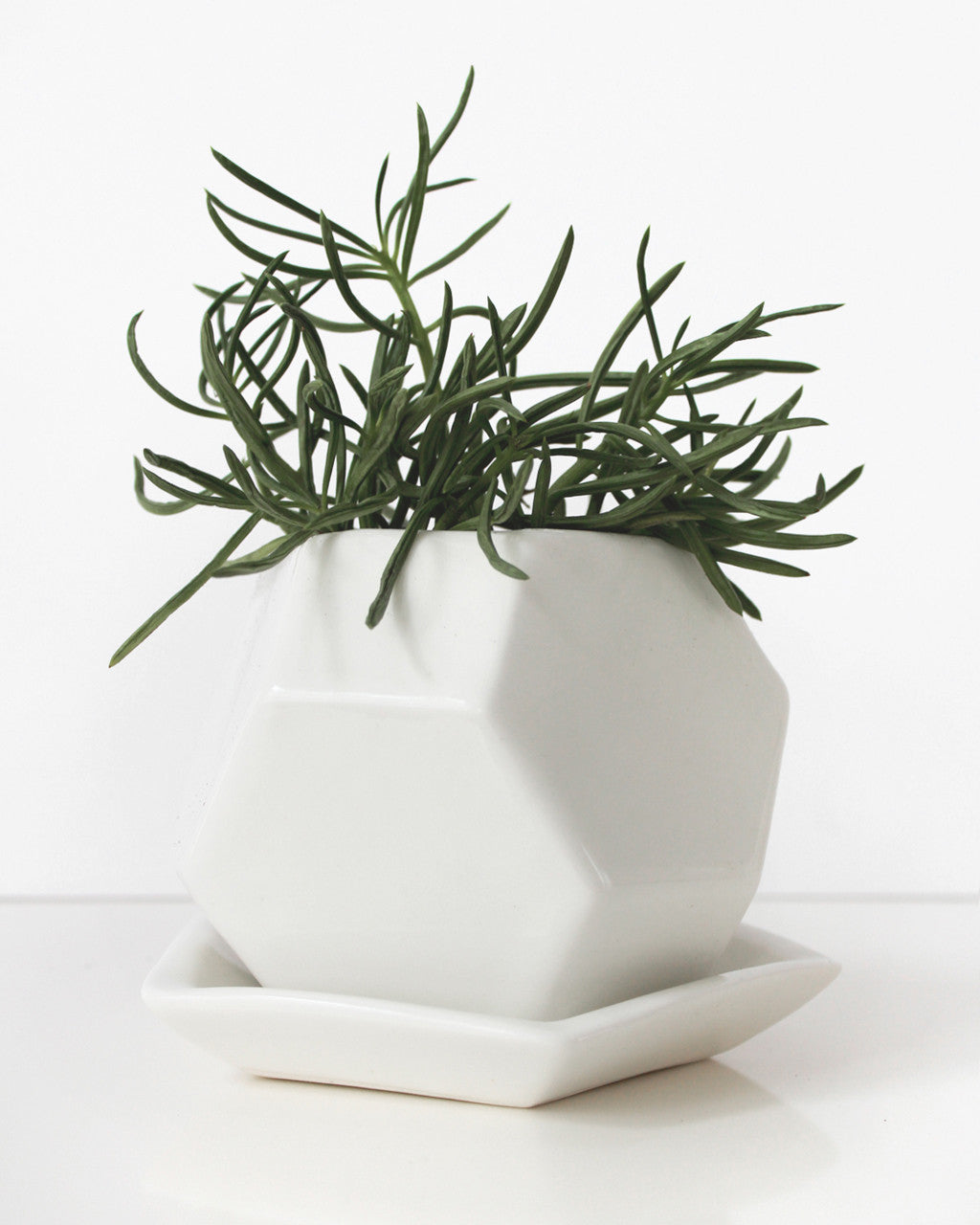 Faceted Planter Everything Ren