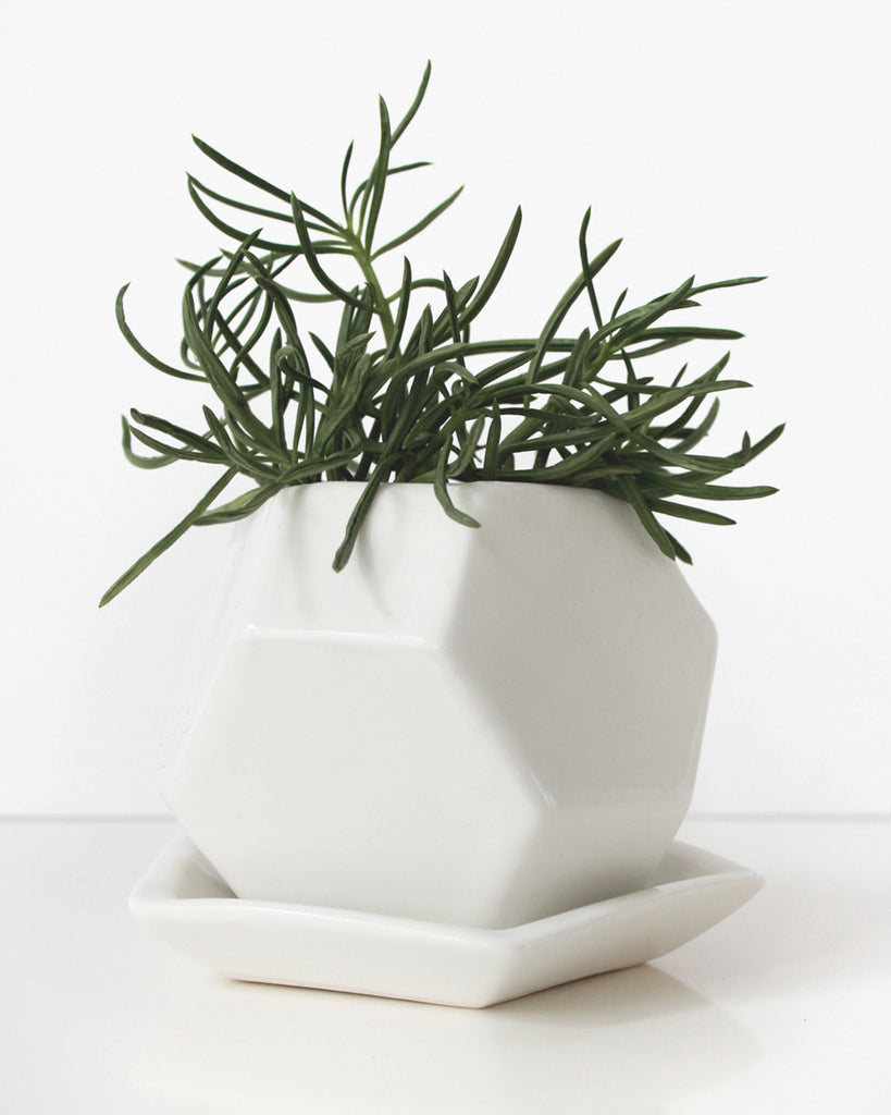 Convivial Production Acacia Faceted Planter - Convivial Production