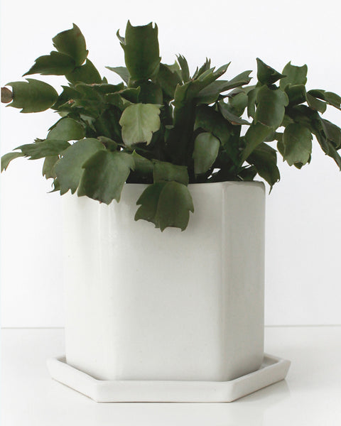 Convivial Production Hexagon Planter - Convivial Production