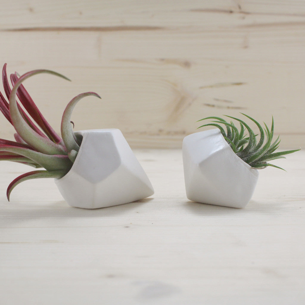 Janelle Gramling Designs Faceted Air Plant Holder