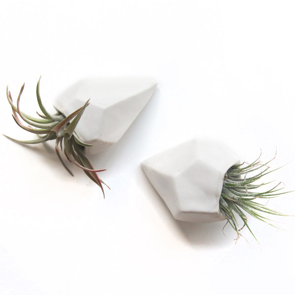 Janelle Gramling Designs Faceted Air Plant Holder - Janelle Gramling Designs