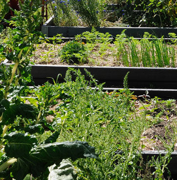 Environmentally friendly raised garden beds