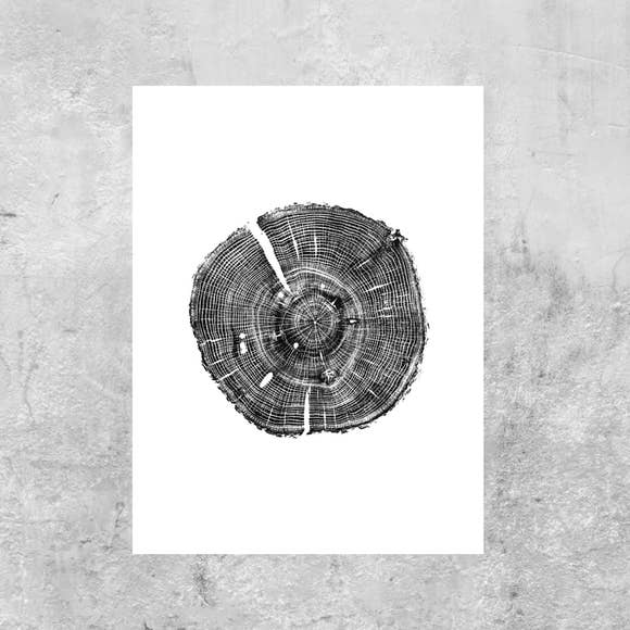 Timber Wood Prints: White Oak, 18x24 inches, unframed