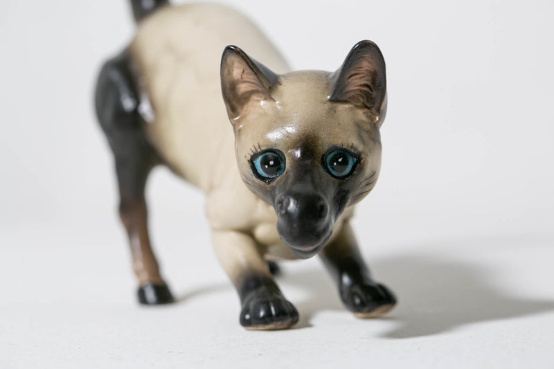 Siamese Horse Cat