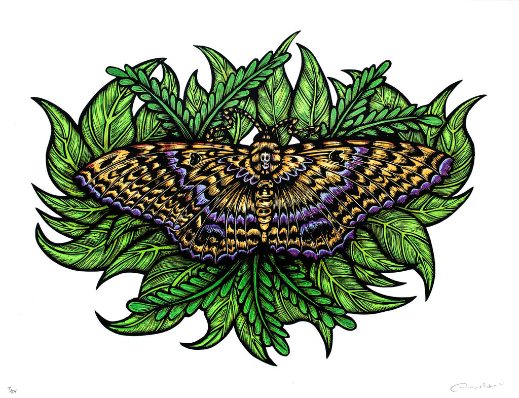 Black Witch Moth (Silkscreen Print)