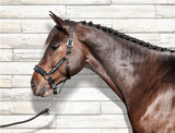 *Best Seller* Equiline Halter and Leadrope Capezza