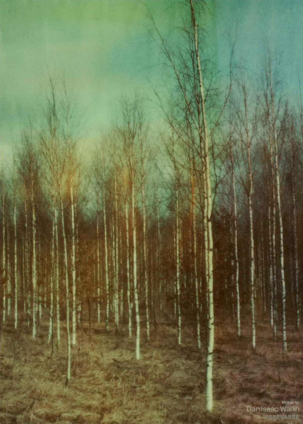 Birches fra Dan Isaac Wallin