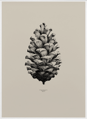 Nature 1:1 Pine Cone, Sand fra Paper Collective