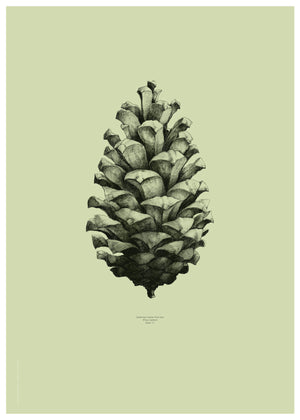 Nature 1:1 Pine Cone, Light Forest Green fra Paper Collective