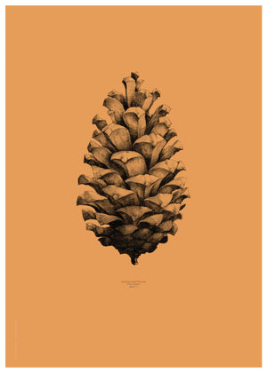 Nature 1:1 Pine Cone, Forest Orange fra Paper Collective