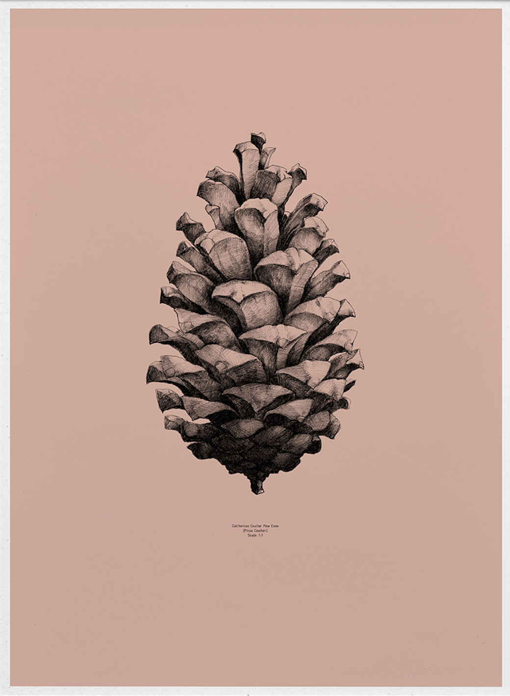 Nature 1:1 Pine Cone, Komodo Pink fra Paper Collective