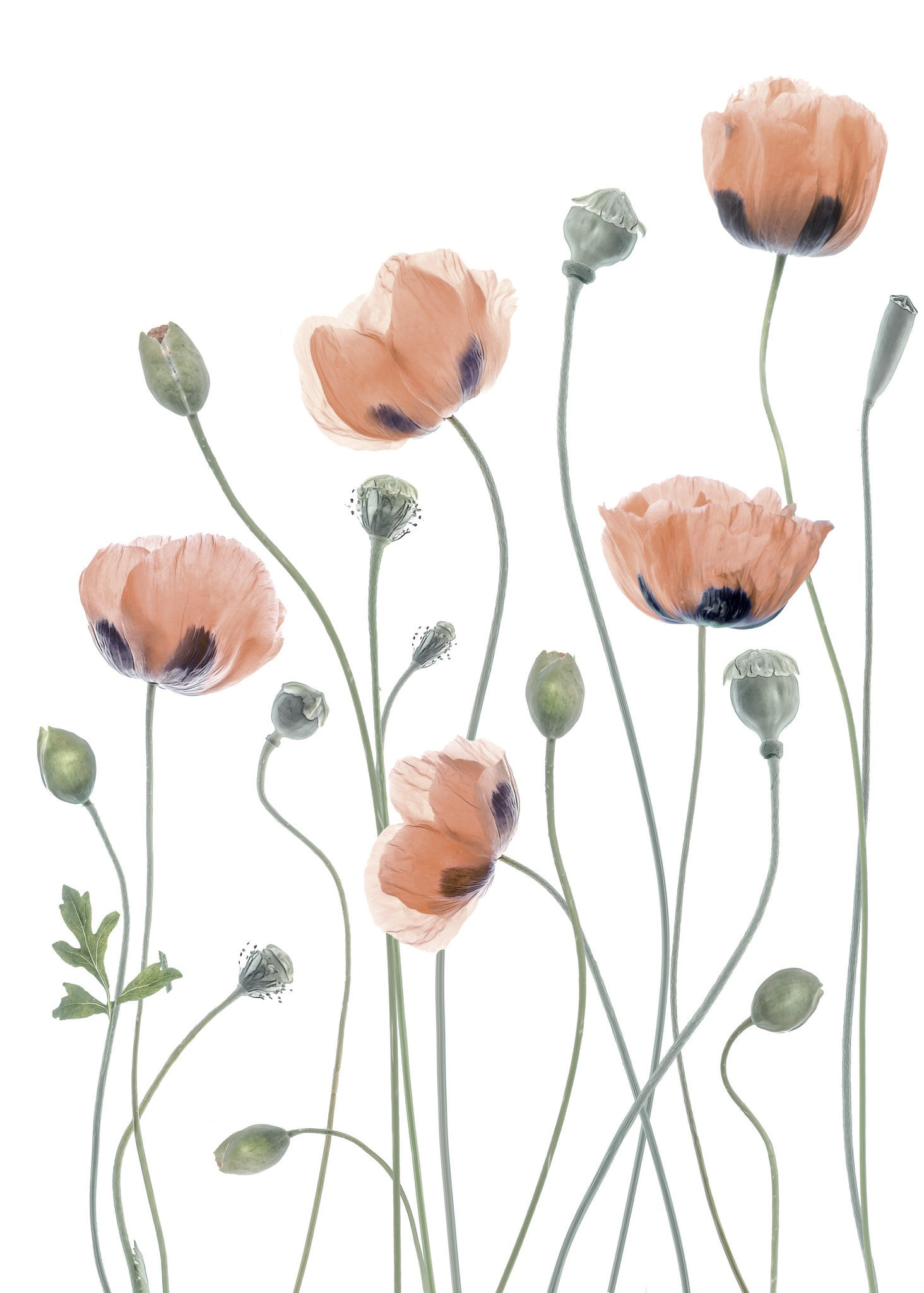 Poppies fra CPH Studio - Selected