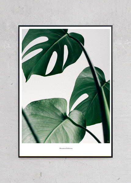Monstera + Sort Metalramme fra Beautiful World