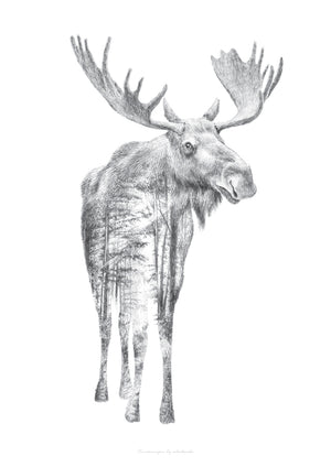 Moose Pencil Drawing fra What We Do