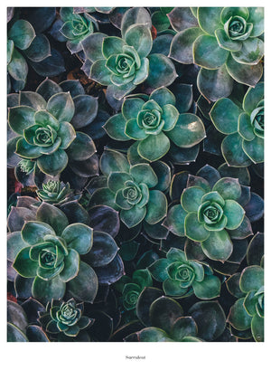 Succulent fra Beautiful World