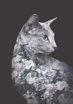 Silver Cat Flower Portrait fra What We Do