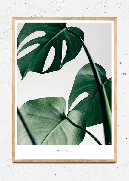 Monstera fra Beautiful World