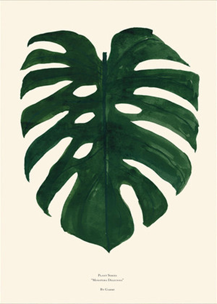 Plants - Monstera fra By Garmi