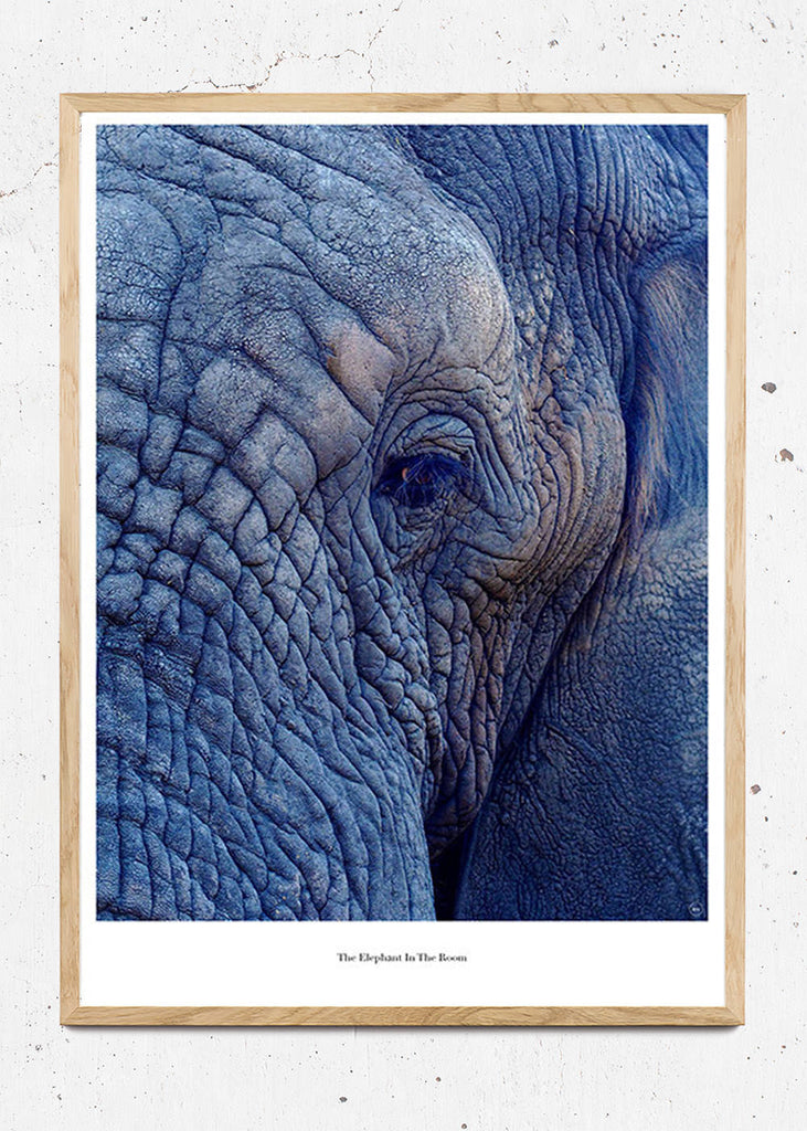 The Elephant In The Room fra Beautiful World