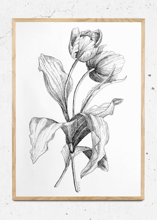 Tulips fra Holm Illustrations