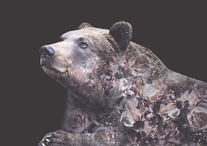 Grizzly Bear Portrait fra What We Do
