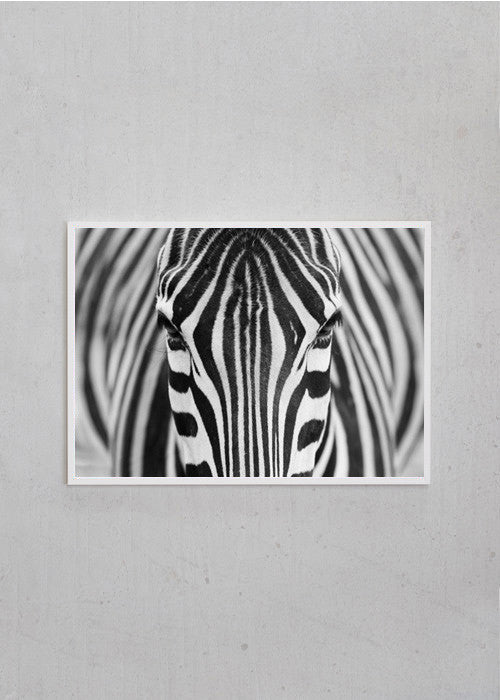 Zebra fra CPH Studio - Selected