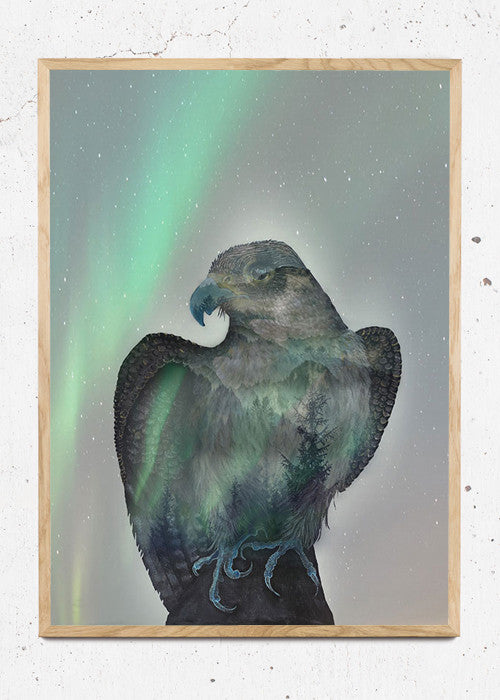 Aurora Falcon fra Art By Austa Lea