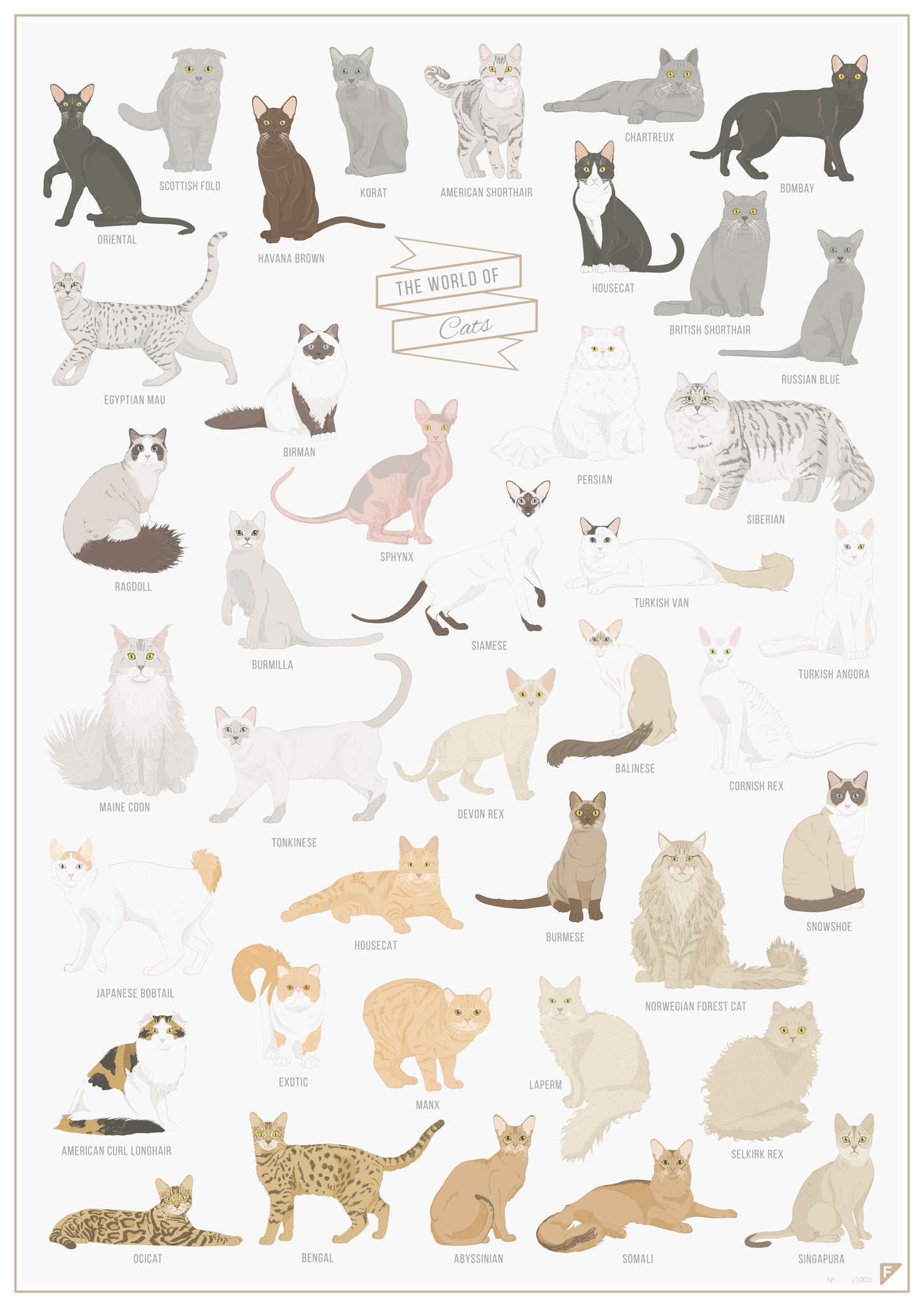 The World of Cats fra FOLLYGRAPH