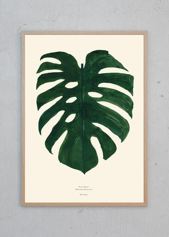 Plants - Monstera