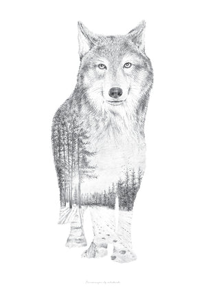 Wolf Pencil Drawing fra What We Do