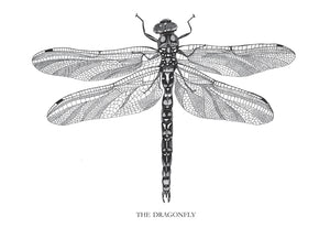 The Dragonfly fra Matilde Olsen