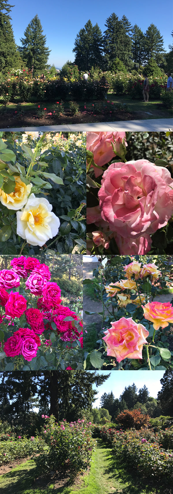 International Test Rose Garden