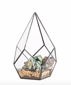 Clear Glass Geometric Terrarium